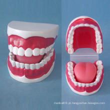 Cuidados de enfermagem 32 Modelo de dentes de tamanho pequeno para ensino