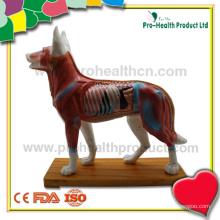 Modelo de cão de acupuntura médica para ensinar