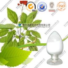 Fabricante Precio a Granel Panax Natural Ginseng Hojas Extracto