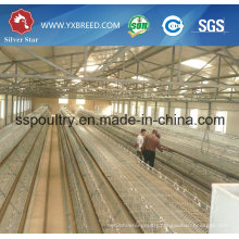 Machinery or Appliances of Poultry Farming