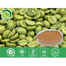 Extrato de grão de café verde / Ácido corogénico / Nº CAS: 327-97-9