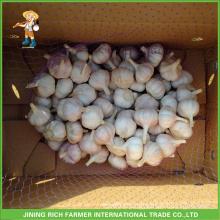 Jinxiang Chinese Fresh Normal White Garlic 5.0CM Mesh Bag In 10kg Carton