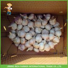 Jinxiang китайский свежий нормальный белый чеснок 5.0CM мешок сетки в 10 кг коробка