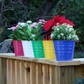 Набор цветов для горшков
