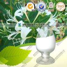 Honeysuchle Flowers Extract Chlorogenic Acid 5%-98%