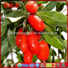 Goji natural goji berry chinese goji berry 2014