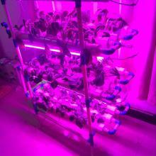 Vertikales hydroponisches Gemüseanbau-System Nft