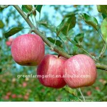 Fuji Apple fresco de China