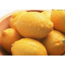 Fresh Yellow Lemon, meilleur prix