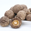 High Grade Organic Dried Mushroom