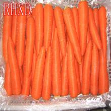 свежие экспорта моркови в Дубай органических свежей моркови