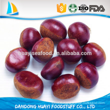 high quality fresh raw chestnut with shell at low price