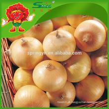 Fresh yellow cebola 2015 nova safra