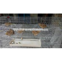 Jaulas de gallinero de codorniz plegables / Jaula de codorniz de capa