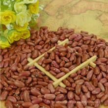 Shanxi Herkunft Kleine rote Bohnen 2017