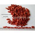 Dried Goji Berry Fruit Supplier