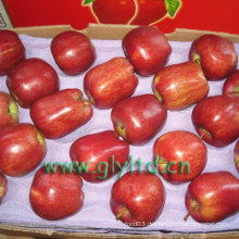 Red Delicious Apple mit hohem Standard