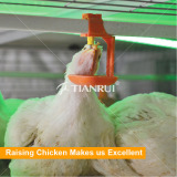 Broiler farm equipment automatic meat broiler feeding system