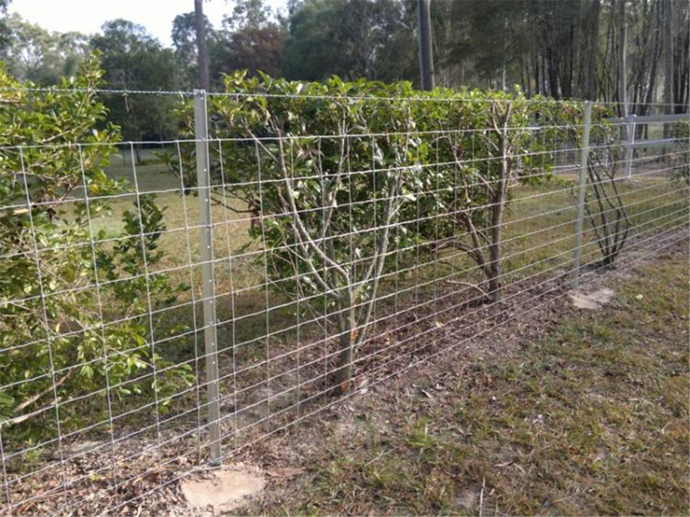 1.8mm Waratah barb wire, 12-115-15 Stiff Stay & gal star pickets