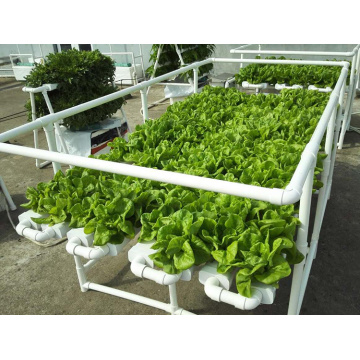 Complete Hydroponics System  For Tomato /Lettuce