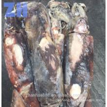 giant squid whole round, Peru squid uncleaned, humboldt squid for bait