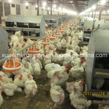 Full Set Poultry Equipment for Breeder