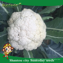 Suntoday non edible vegetable fresh vegetable importers in singapor heirloom F1 bangladesh vegetable cauliflower seeds(A41005)