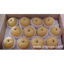 Nouvelle culture d'exportation de bonne qualité Poire Fengshui chinois