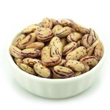 Haricots légères tachetés type long nom scientifique des haricots