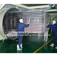 Máquina de secagem por congelamento a vácuo de temperos