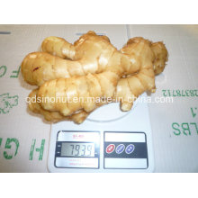 Nuevo Super Ginger (250G y UP)