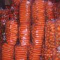2016 nature carottes fraîches