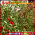 Bio-Gemüse Goji Beere Harvester Namen von roten Früchten Ningxia Wolfberry