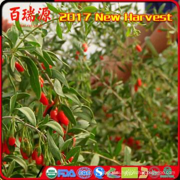 органические растительные ягоды годжи имен комбайн красных ягод лайчи нинся