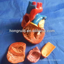 Modelo del corazón del adulto del nuevo estilo del ISO, modelo de la anatomía del corazón