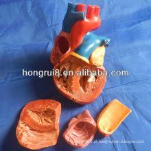 Modelo de coração adulto novo estilo ISO, modelo de anatomia cardíaca