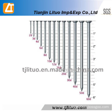 Low Price Supply Common Iron Wire Nail
