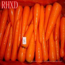свежий прайс морковь 2018 рыночных цен на свежие морковь