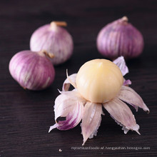 Fresh garlic price in China
