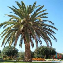 Green PP PU Artificial Palm Tree
