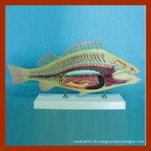 Professionelle Hersteller Tier Modell für Wissenschaft Lieferant Fisch Anatomie Modell