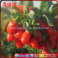 Стандарт ЕС ГНЦ де годжи органические ягоды годжи ягоды годжи с бесплатные образцы