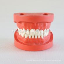 28pcs tornillo fijo dientes goma dura modelo dental estándar 13002