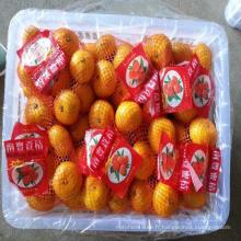 ponkan frais lugan orange