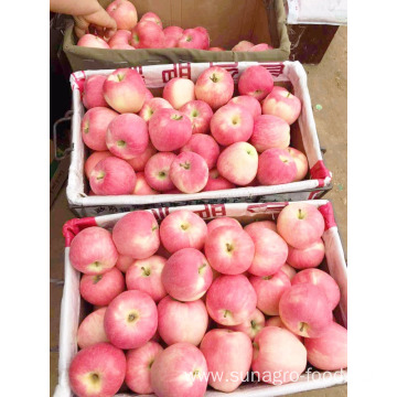 A large Chinese red star apple