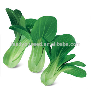 PK10 Guanhua early maturity op pakchoi seeds, rape seeds for planting