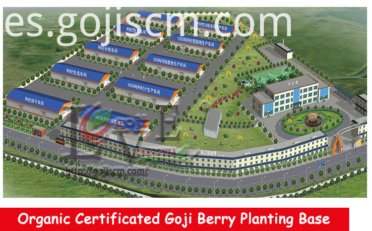 BULK GOJI BERRY supplier
