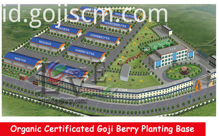 CHINESE GOJI BERRY manufacturer
