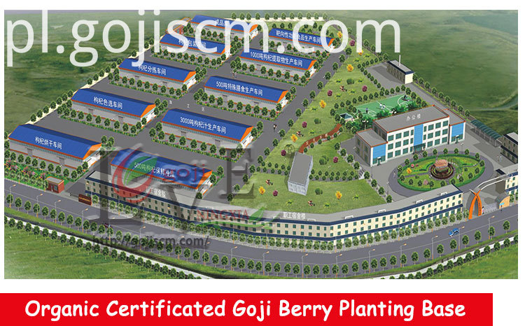 High Quality GOJI BERRY manufacturer
