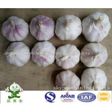 Свежий обычный белый чеснок от Jinxiang, Шаньдун, Китай
